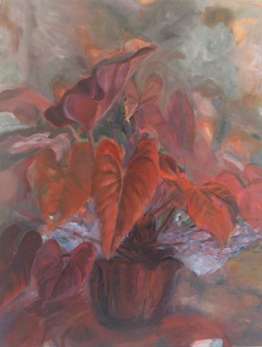 Red Plant At Morning
