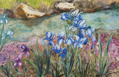 Julie's Irises along Immel Creek